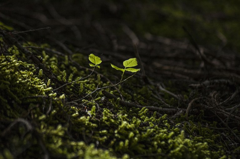 Décennie des Nation Unies pour la restauration des écosystèmes