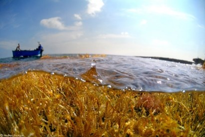 Examen de la feuille de route relative à la conservation de la biodiversité de la Méditerranée dans l'ère post 2020