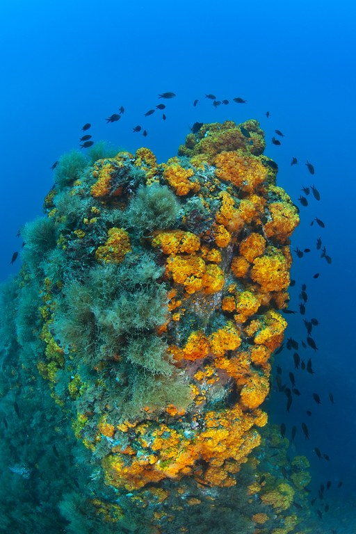 Exposition photographique sur les habitats marins clés de Méditerranée