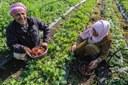 Communiqué de presse - Soutient de la Palestine par le project WES dans la gestion et les pratiques optimales de l'irrigation