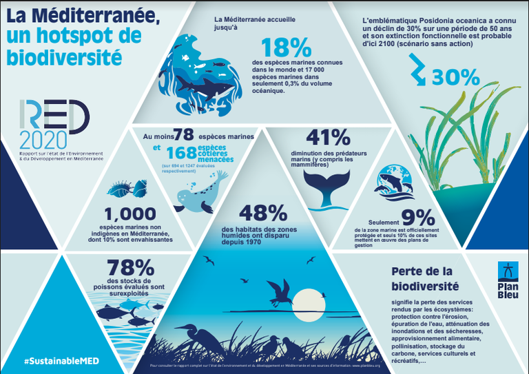 InfographieBiodiversité_FR.PNG