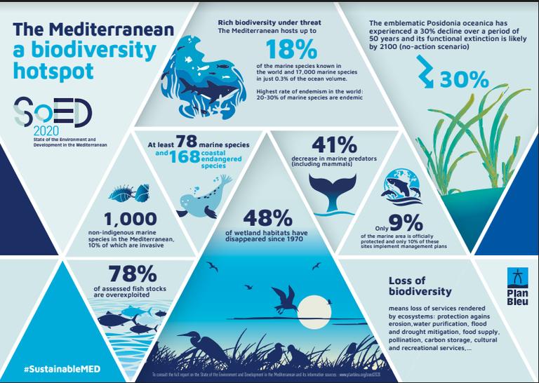 InfographieBiodiversity_EN.PNG