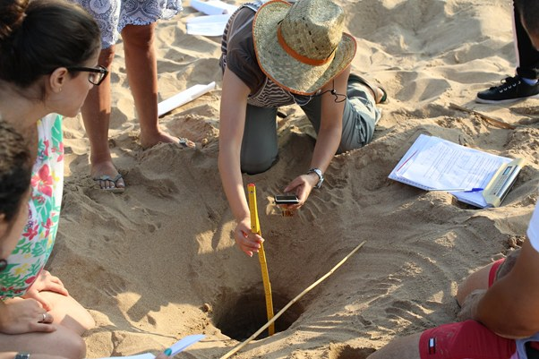 Marine turtle nesting site monitoring in the Tyre Coast Nature Reserve ©SPA/RAC